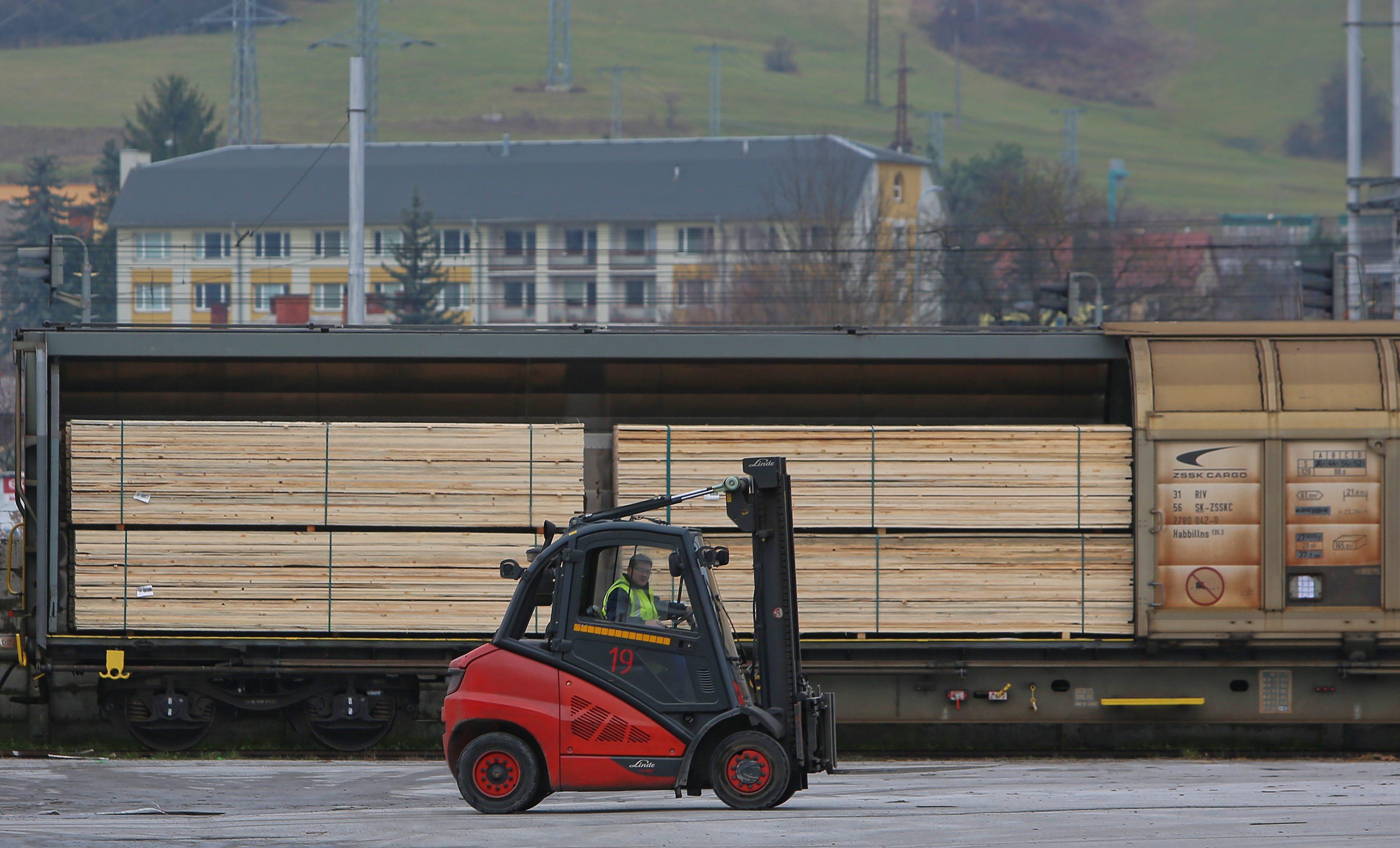 nelegálna ťažba dreva