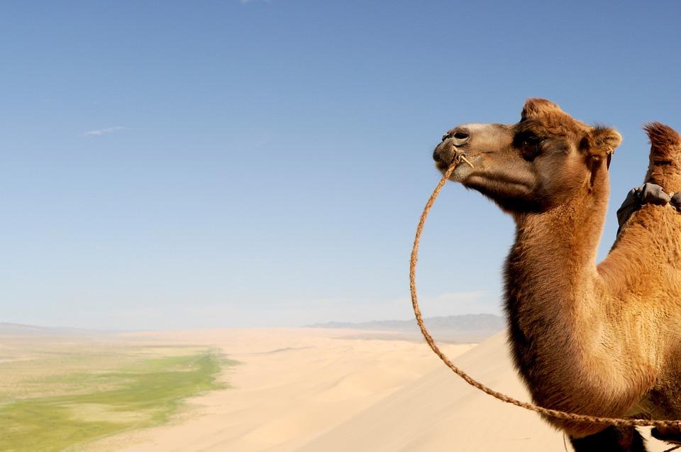 mongolsko veterná energia