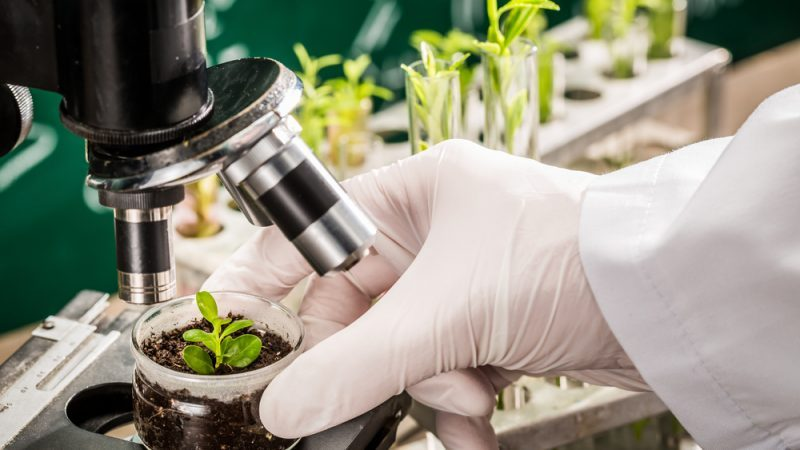 GMO mutageneza